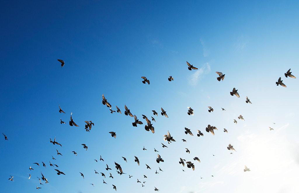 Richtiges Leben – 3. Wenn die Vögel Flügel hätten
